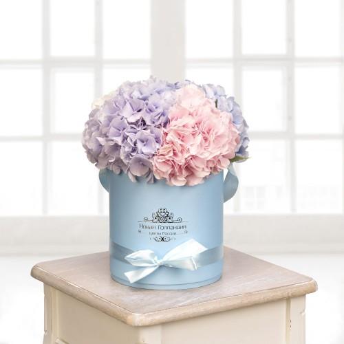 Купить на заказ Гортензии в голубой шляпной коробке (5 шт.) с доставкой в Жезказгане