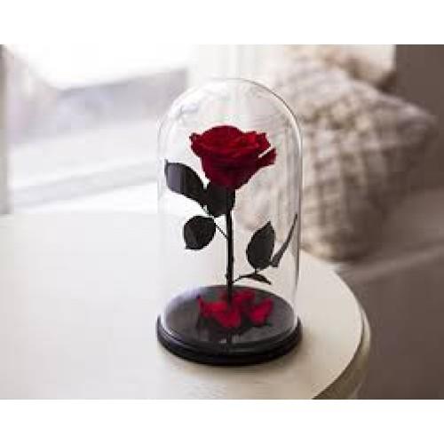 Купить на заказ Заказать Роза в колбе Красная с доставкой по Жескасгану с доставкой в Жезказгане